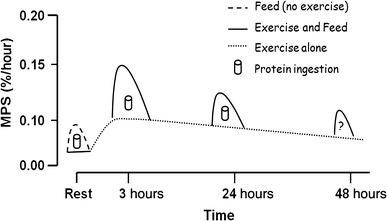 タンパク質の合成感度の変化