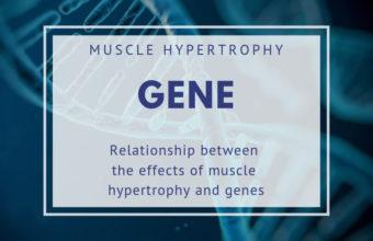 筋肥大の効果と遺伝子の関係を徹底解明!体質を見極めて自分に合うトレーニング方法を探そう